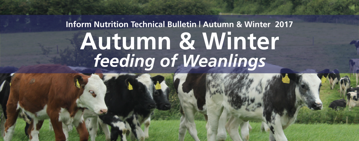 Autumn and Winter feeding of Weanlings