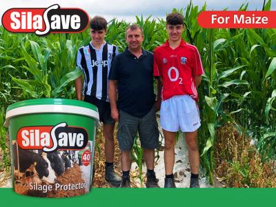 silasave-maize-testimonial-website