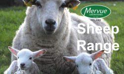 Sheep Range 4