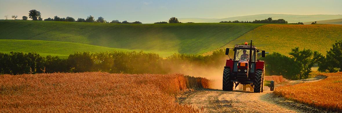 KERVA for Grain Enhanced Feed