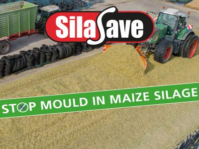SilaSave Maize web block